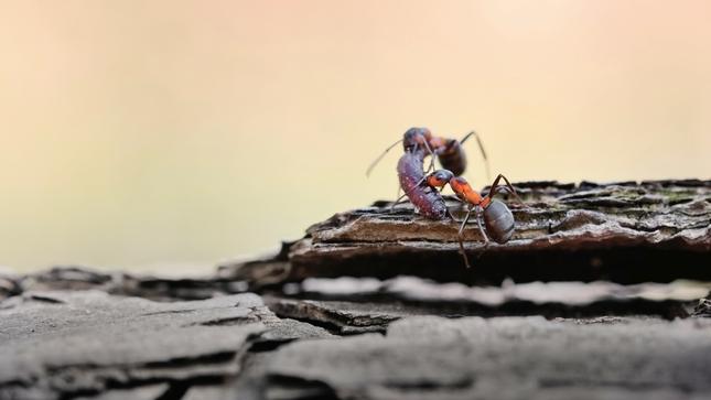 Príbeh mravca - zásoby