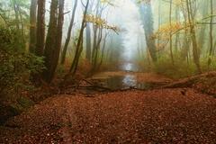 Hmlisté ráno jesenné