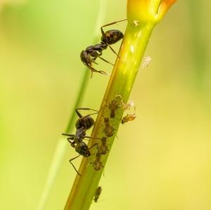 Život mravca ...