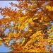 Strom v jesennom šate