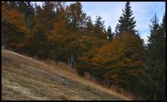 Jesenná ozdoba svahu