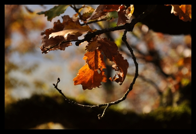 Úsmev jesenného stromu