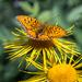 zem motýľov