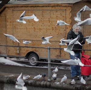 vo víre vtákov