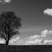 Sám sebe strom