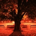 Nočný park strom