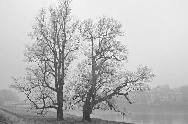 Tancujúci v hmle