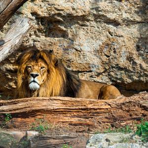 Kráľ 2