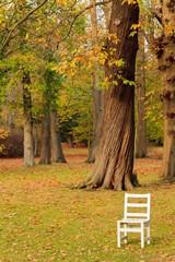 Oddych v lese