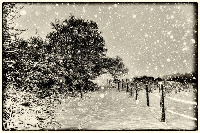 Pada sniezik pada