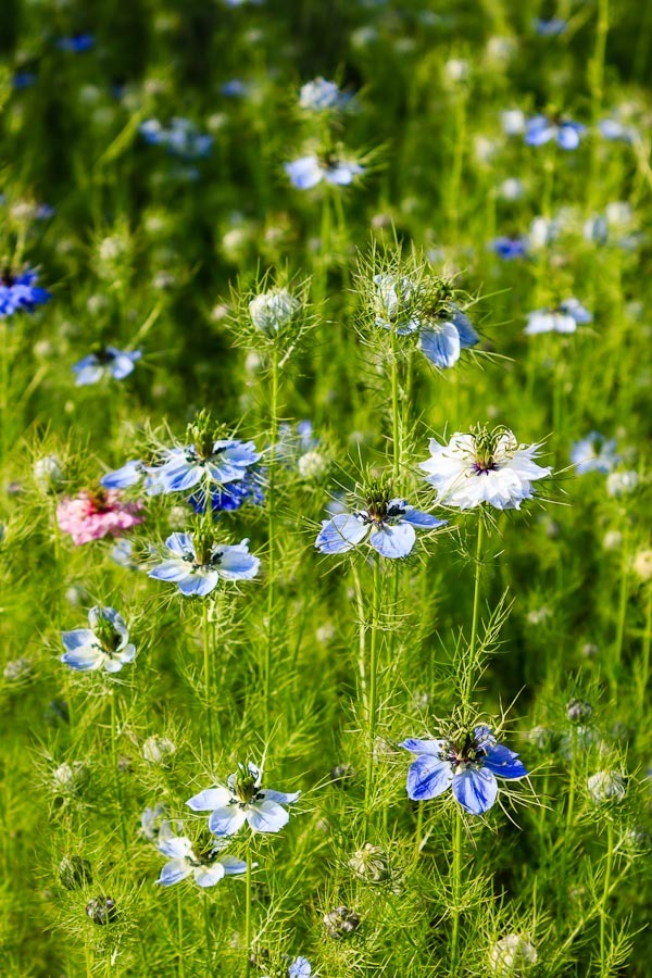 Kvety 1