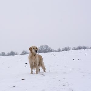 V zamrznutej krajine
