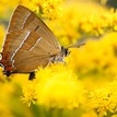 Motýľ 1