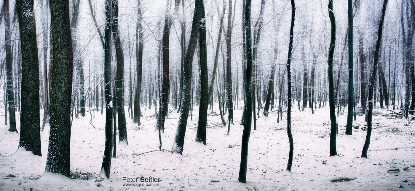 Magicky zimný les - Malé Karpaty