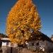jesen na dedine