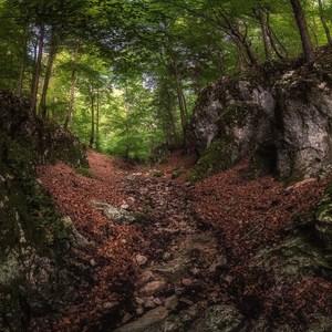 V Strážovských lesoch