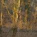 svetlo vlese