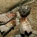 Zimujuci hmiz v jaskini
