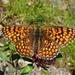 Motyľ