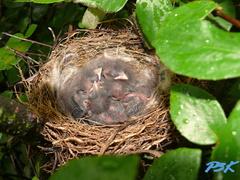 V hniezde