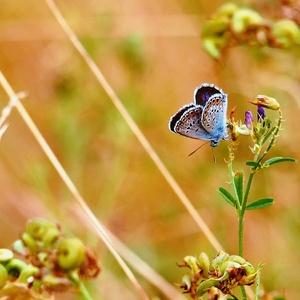 Naj motýlik