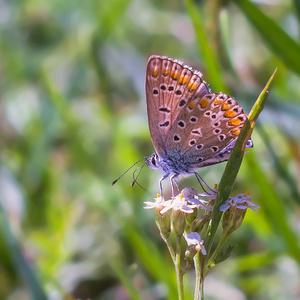 Oblúbený motýl