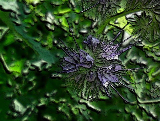 Dynamickosť kvetiny 2