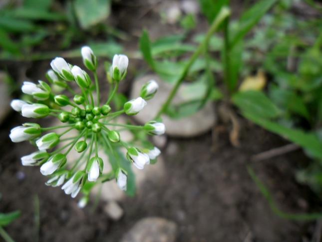 Geometria kvetu