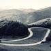 Cesta v srdci hôr