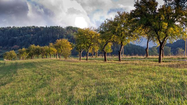 Stromo-poradie