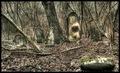 cintorín v lese