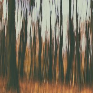 Lesné nepríjemnosti