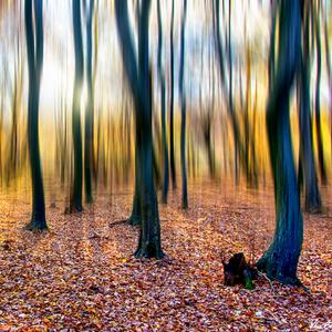 V zajatí lesa