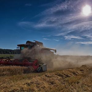 Harvest_15