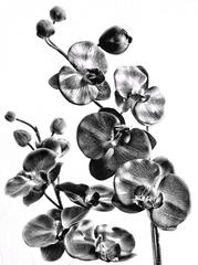 Orchidey ...