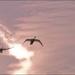 Labutia pieseň
