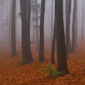 Stratené v hmle