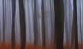 Lesná ilúzia