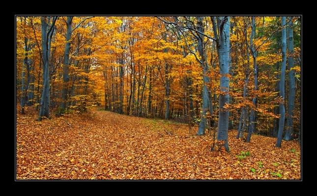 Jeseň v bučine