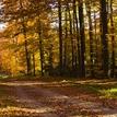 Jeseň pod Kojšovskou hoľou