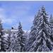 Zima na Kojšovke 2