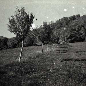 čiernobiela jeseň