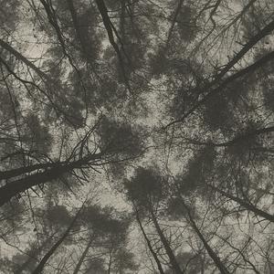 v lese je pekne