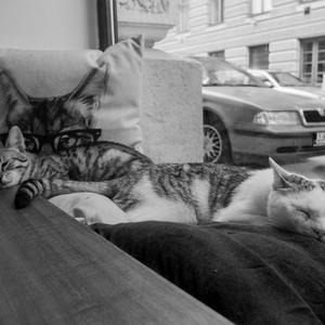 Večerná siesta