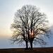 Strom na poli :)