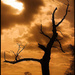 Chodiaci Strom