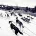 Snežné Psy 2014