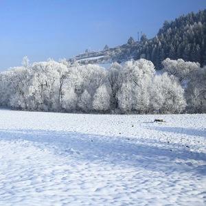 Snehová
