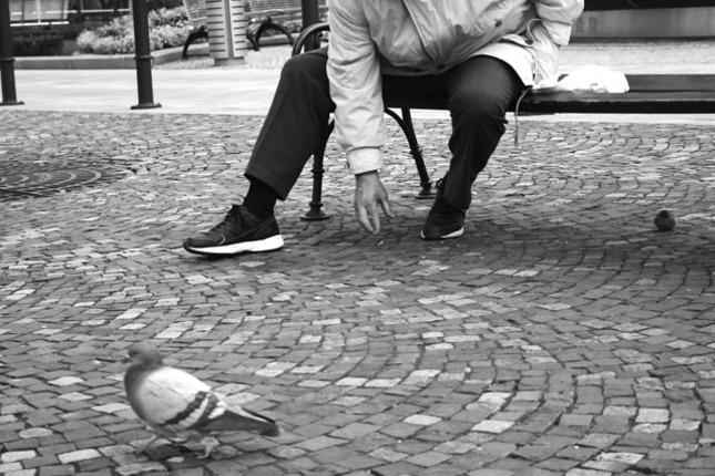 krmenie holuba