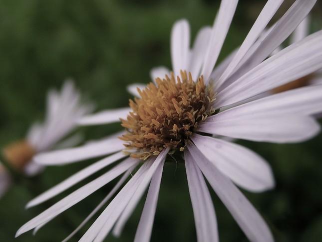 Kvet v šere